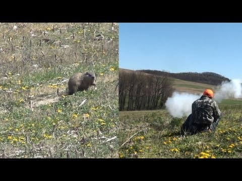 Groundhog Hunting With Muzzleloader, Bow & Rifle 2012