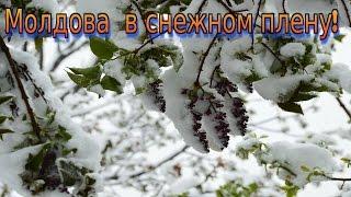 Снег в Молдове в апреле!  Настоящее бедствие!