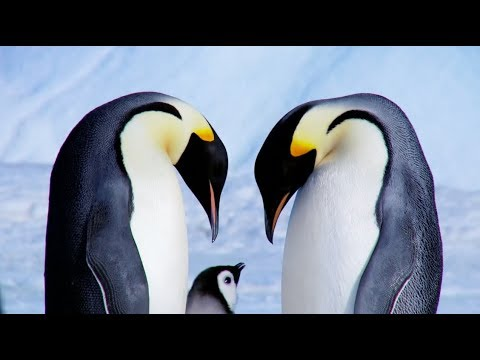 Expedition Emperor Penguin