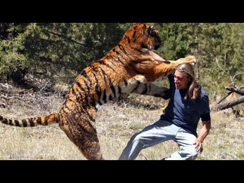 The Lives Of Tigers -Documentary - HD 2014