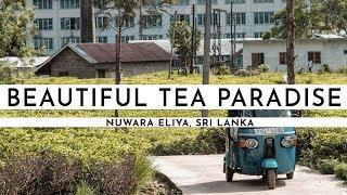 NUWARA ELIYA TEA PLANTATIONS · SRI LANKA 2018 I TRAVEL VLOG #59 thumbnail