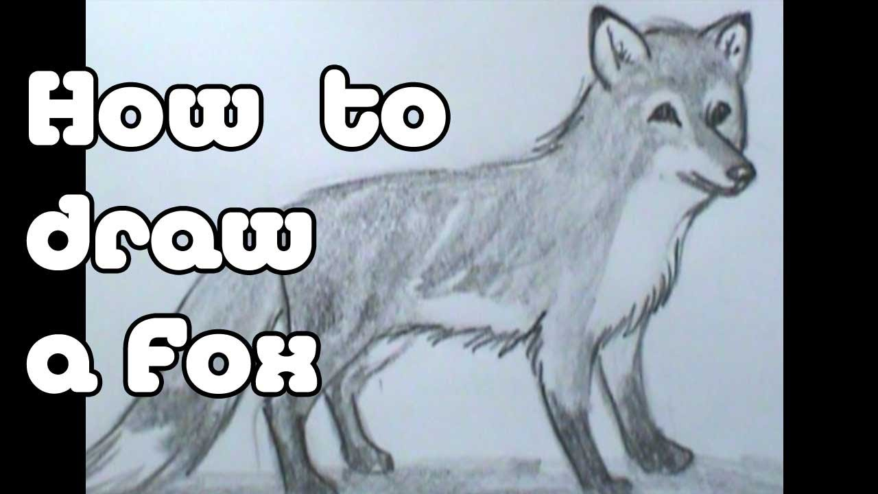 how to draw a fox youtube