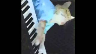 FUNNY VIDEOS  Funny Cats   Funny Cat Videos   Funny Animals