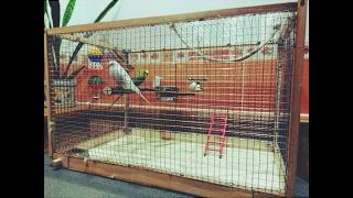 видео клетки для птиц