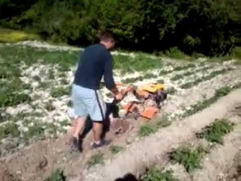 Coltivazione patate youtube for Quando si seminano le patate