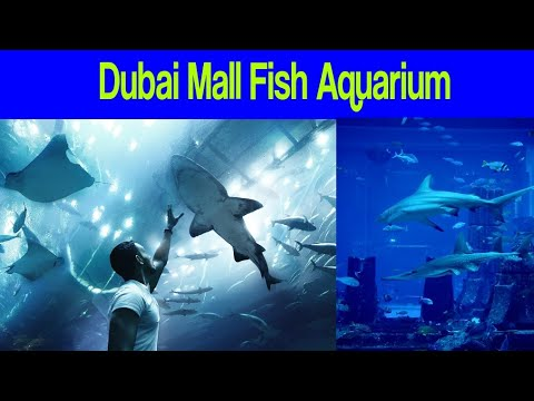 Dubai Mall Fish Aquarium | Dubai | UAE | Dubai Entertainment