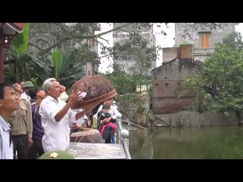 Hội thi chim bồ câu bay Bắc Ninh