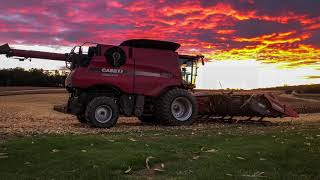 Skyblu Farms Corn Harvest 2018