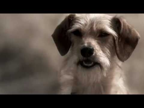 """Ditched"" Humane Society Commercial"