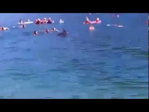 Delfin se kupa s plivačima u Neumu / Dolphin having fun with people in Neum