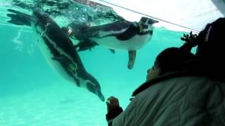ペンギンと首振り遊び