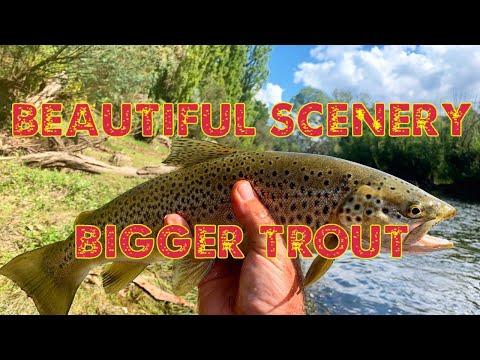 Finally Found Some Bigger Tout - Mitta Mitta River, Trout Fishing Victoria