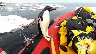Video captures penguin jumping onto a boat