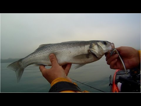 Kayak Fishing - Fishing for Sea Bass with Soft Plastic Lures - Tips for Beginners
