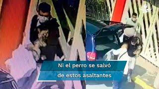Tres sujetos robaron una vivienda, llevándose con todo tipo de objetos y también a la mascota de la familia