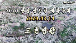 [4K 드론영상] 2020년 광양 섬진강 매화 축제 -…