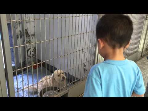 Cute Dog Begging to be Adopted at the Animal Shelter