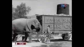 Working Elephants : Documentary on Life for Captive Elephants (Full Documentary)