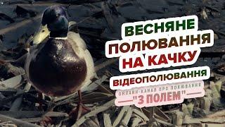 Весняне полювання на качку ( Відеополювання) / Весенняя охота на утку (Видеоохота)