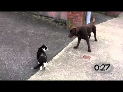 Dogs Running Away From Cats