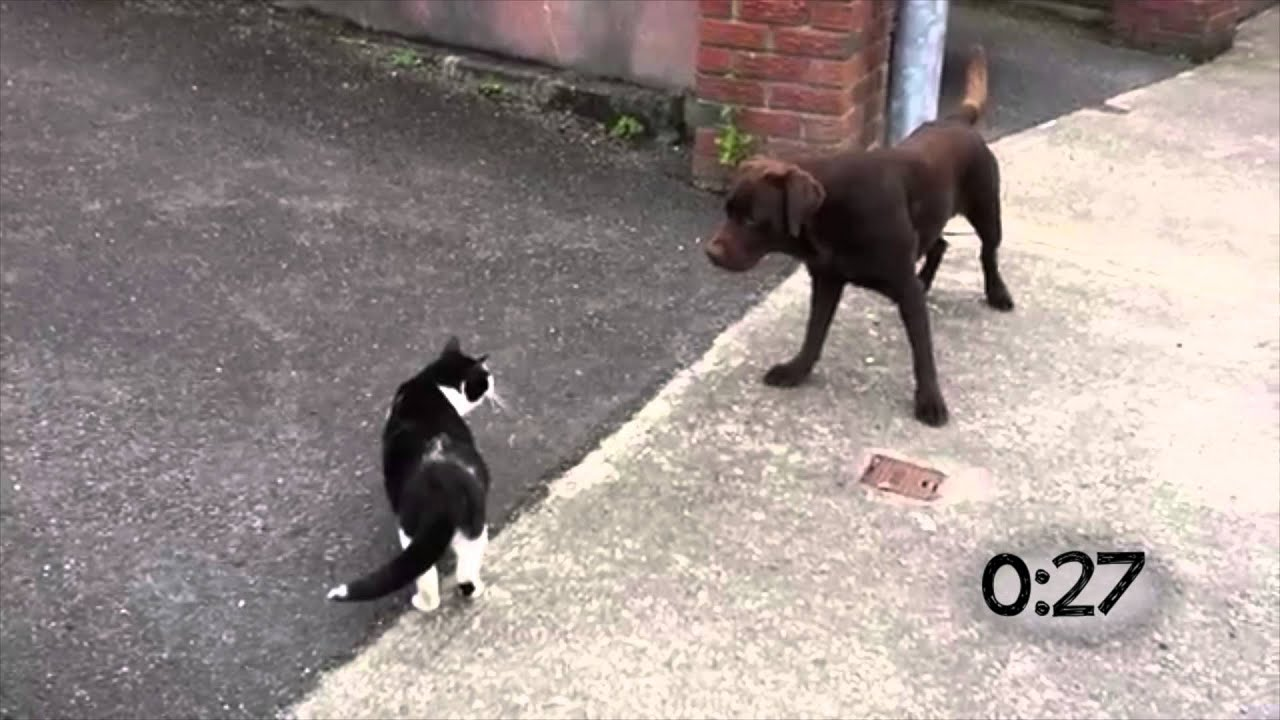 Dogs Running Away From Cats  YouTube