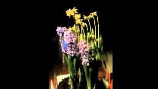Flower Time laps.m4v