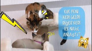 KEDİ RESMEN DİLE GELDİ (En Komik Kedi Anlaşma Videosu) |#herşeyaşkla
