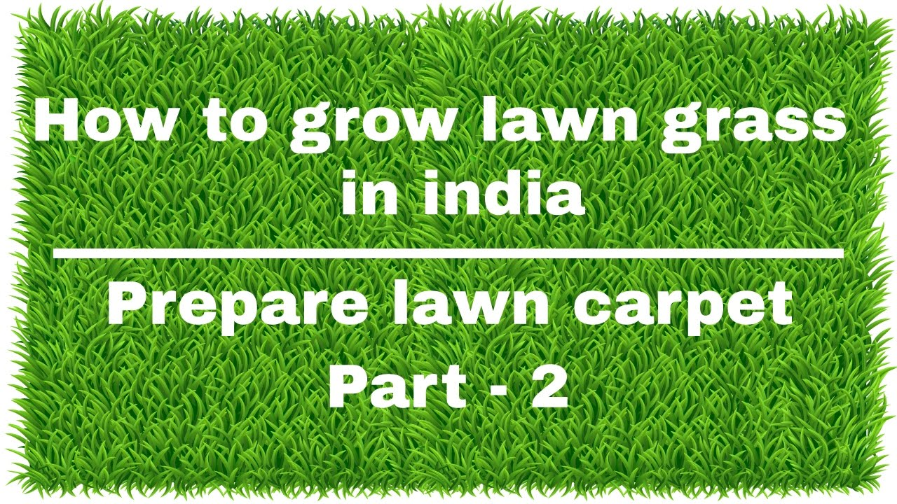 How To Grow Lawn Grass In India Prepare Lawn Carpet Part 2 Youtube