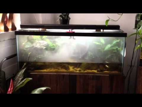 Fog In The Terrarium Youtube