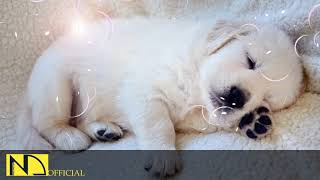 10 Hours Calming Sleep Music  Stress Relief Music, Insomnia, Relaxing Sleep Music ♬ Dog Loves Baby