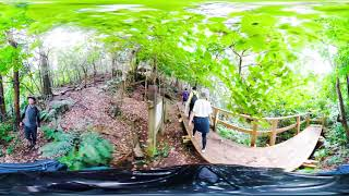 TAMA & SHIMA 360° VR ANIMAL VIEW_Streaked Shearwater
