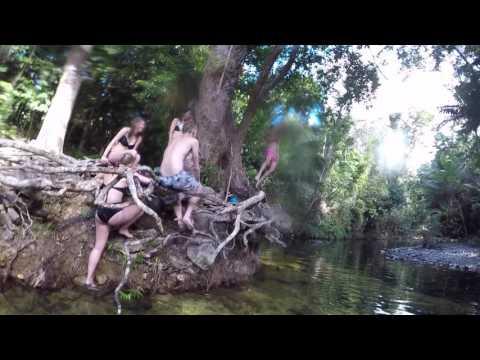 Daintree Rainforest - Cape Tribulation