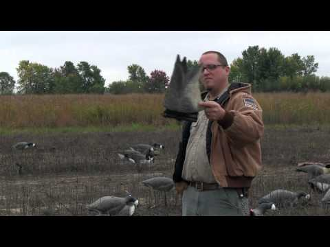 Introduction To Canada Goose Hunting | Indiana DNR