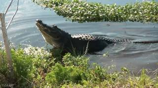 wildlife at circle b bar ranch lakeland fl
