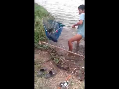ตกปลาชะโด ด้วยเหยื่อปลาดุก3ตัวโล ใหญ่และโหดมาก ที่แปดริ้ว