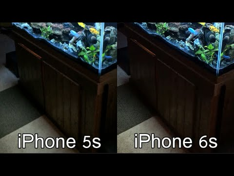 iPhone 5s and 6s video compared using an aquarium