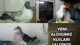 Yeni Güvercinlerimizi Saldık