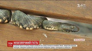 як зробити з пластиліну змію