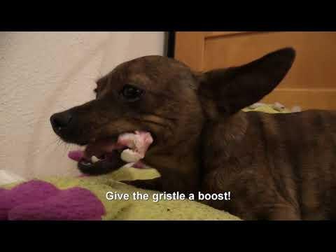 Koirien herkkuhetki - Dog's delicacys