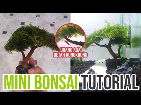 bonsai-keren,-simple-mini-bonsai-aquascape-nature-style
