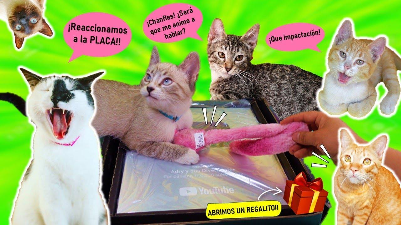 🙀 Gatitos Hablan por primera vez + Diverti REACCION a la PLACA 100K!! ✨