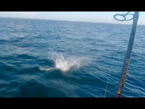 Treasure Coast offshore drag screamers!!