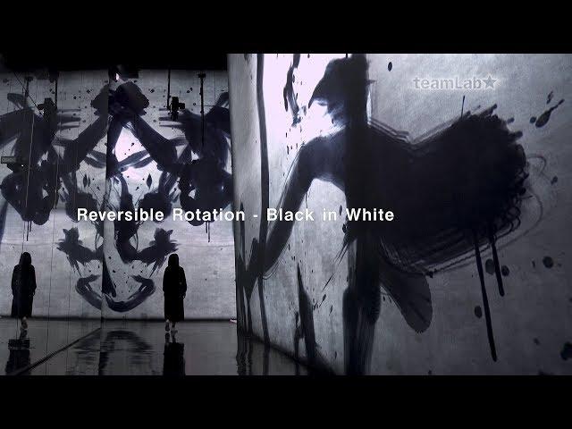 Reversible Rotation - Black in White