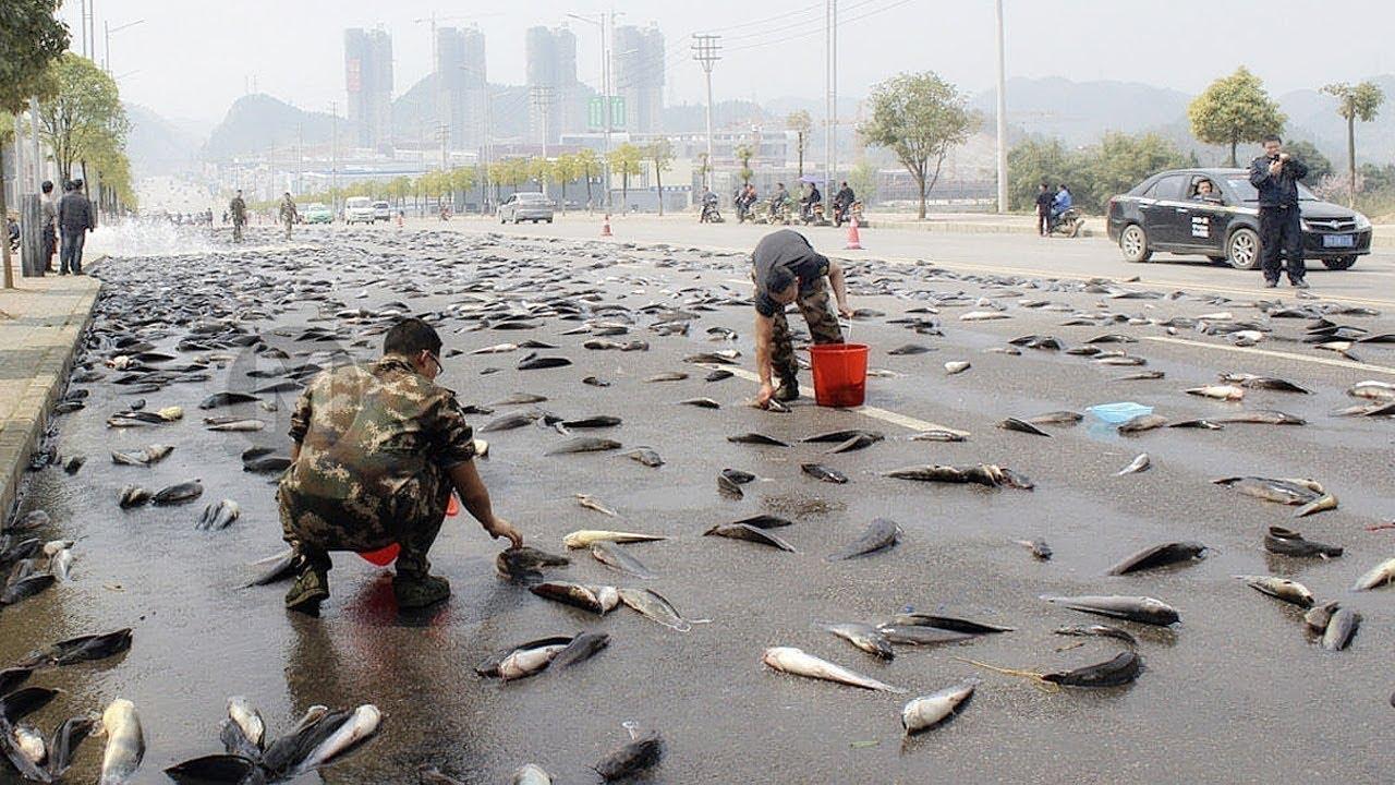 أغرب أمطار ممكن تشوفها   تمطر أسماك ؟!