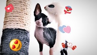 ❤️🐈Первые покупки котёнку сфинкса/ Маленькая Нюша🐈❤️