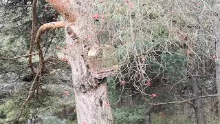 """Рила хотел """"Теменуга"""" 0889553515 прекрасно място и Природа.."""