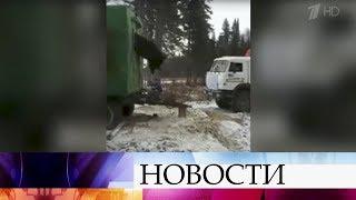 ВНижневартовске пришлось вызволять застрявшего вокне вагончика медведя-воришку.