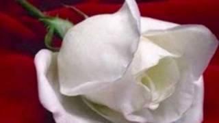 Play Te Llegarai Una Rosa