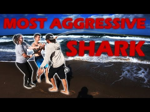 She Is Fighting The Most Aggressive Shark In The Ocean!