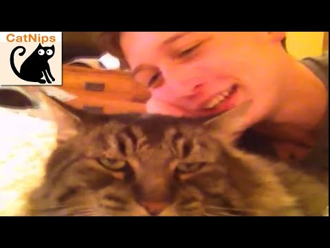Grumpy Cat Claws And Attacks Vine Star Kid | CatNips